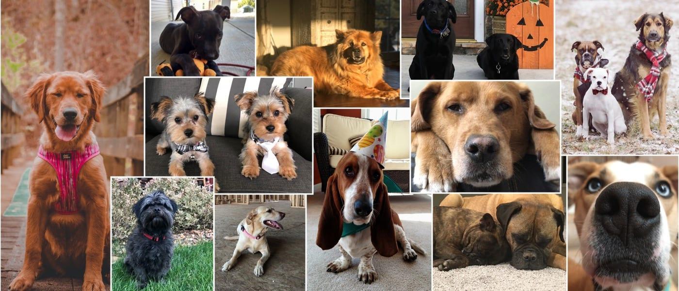 Meet the wayne dogs
